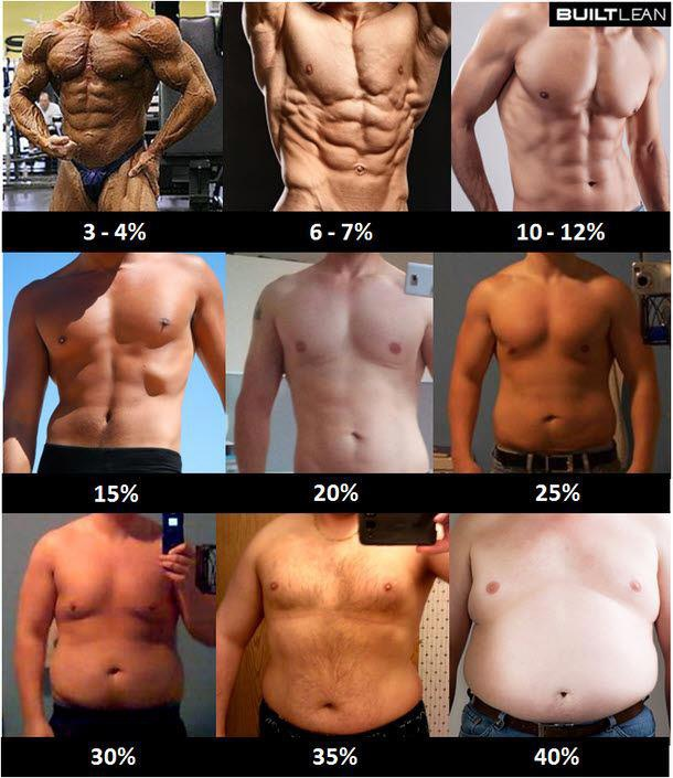 體脂肪圖.jpg