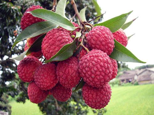 水果12.jpg